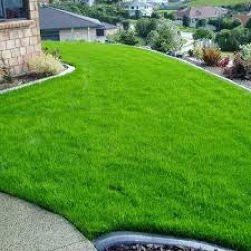 Como ter um belo gramado?