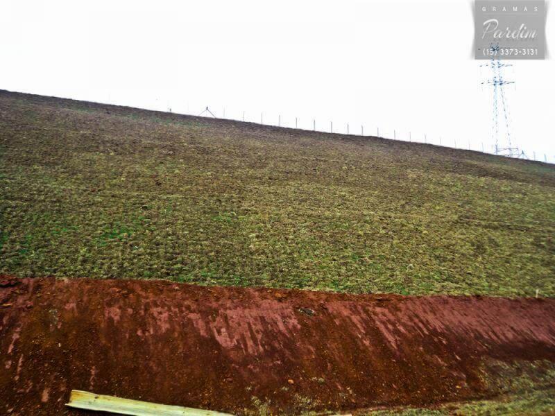 Plantio de Grama em Placas